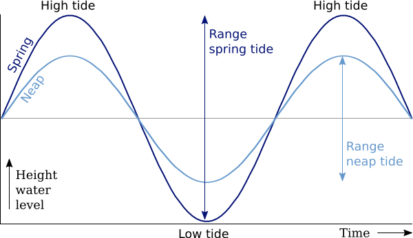 Tidal ranges - differences between neap tides and spring tides - graph